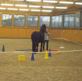 equine learning